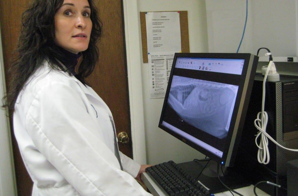 Veterinarian Ellicott City X-ray check